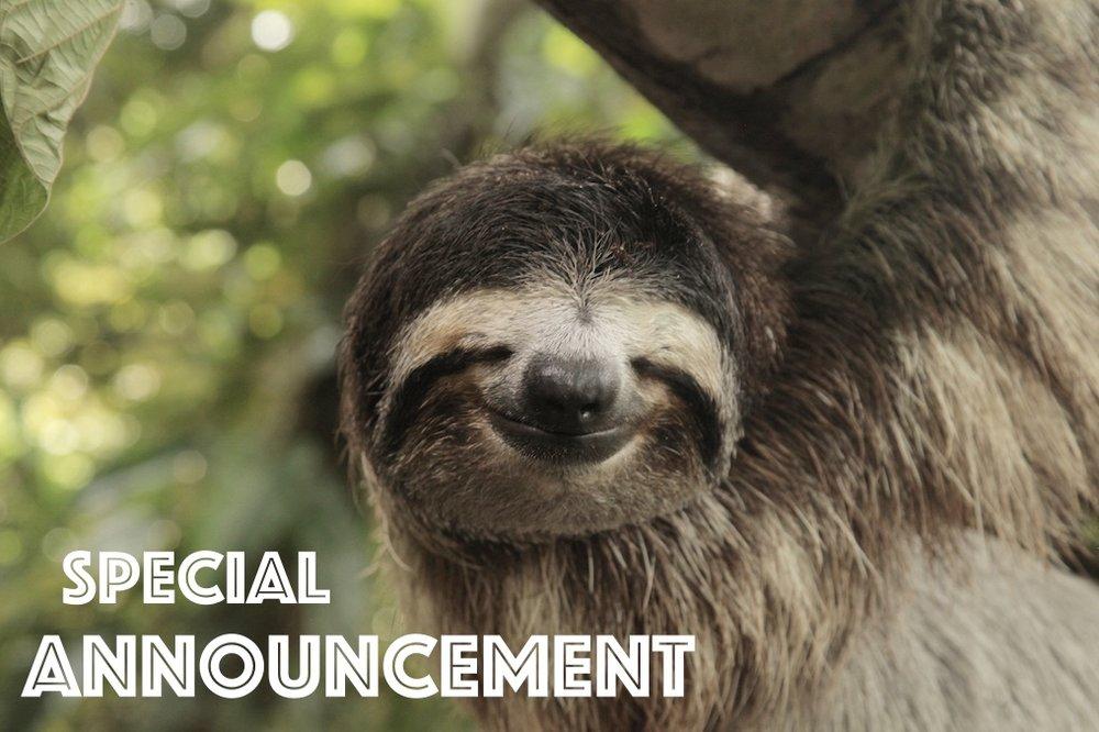 sloth_Fotor.jpg