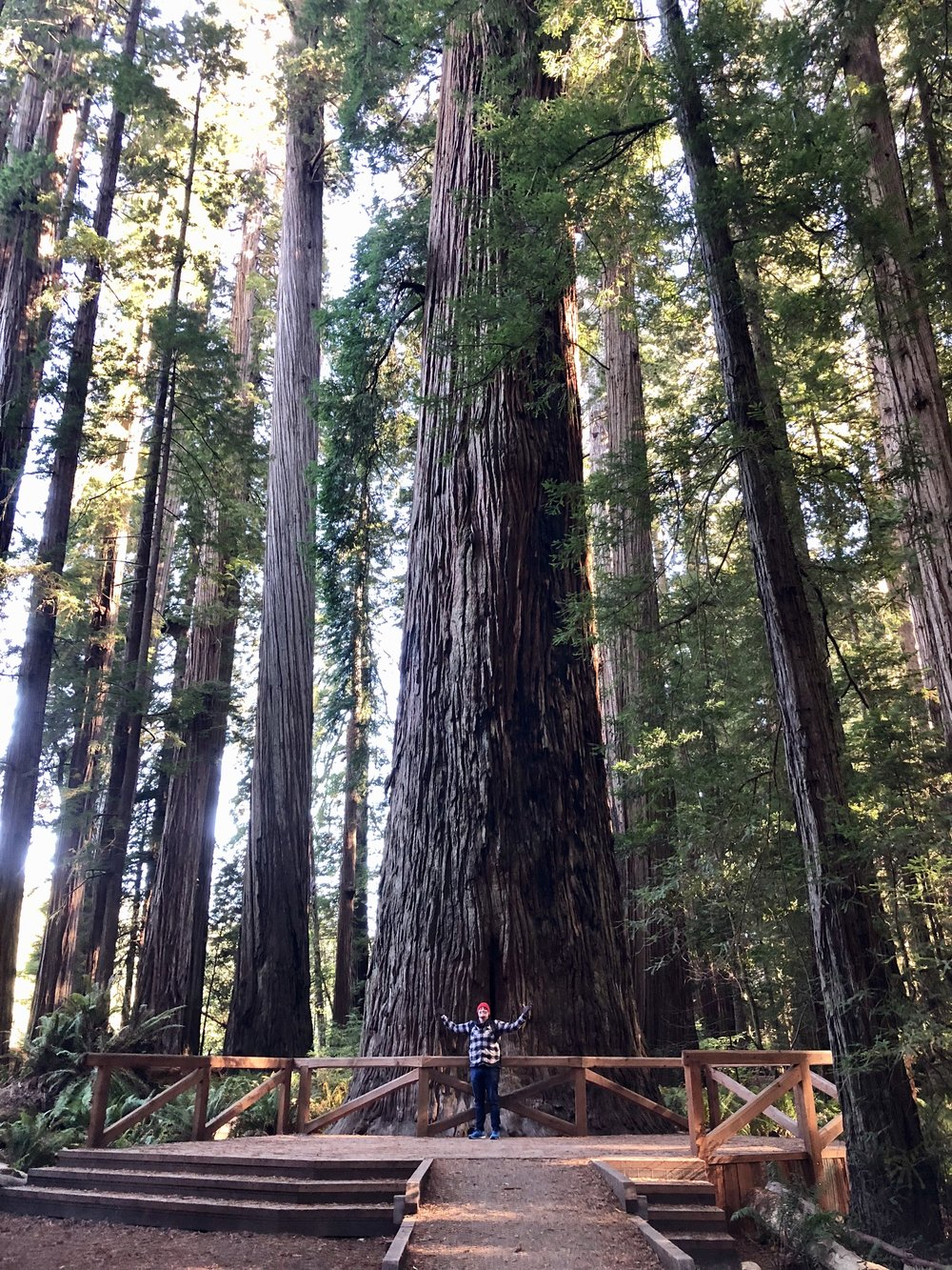 redwood pic.jpg