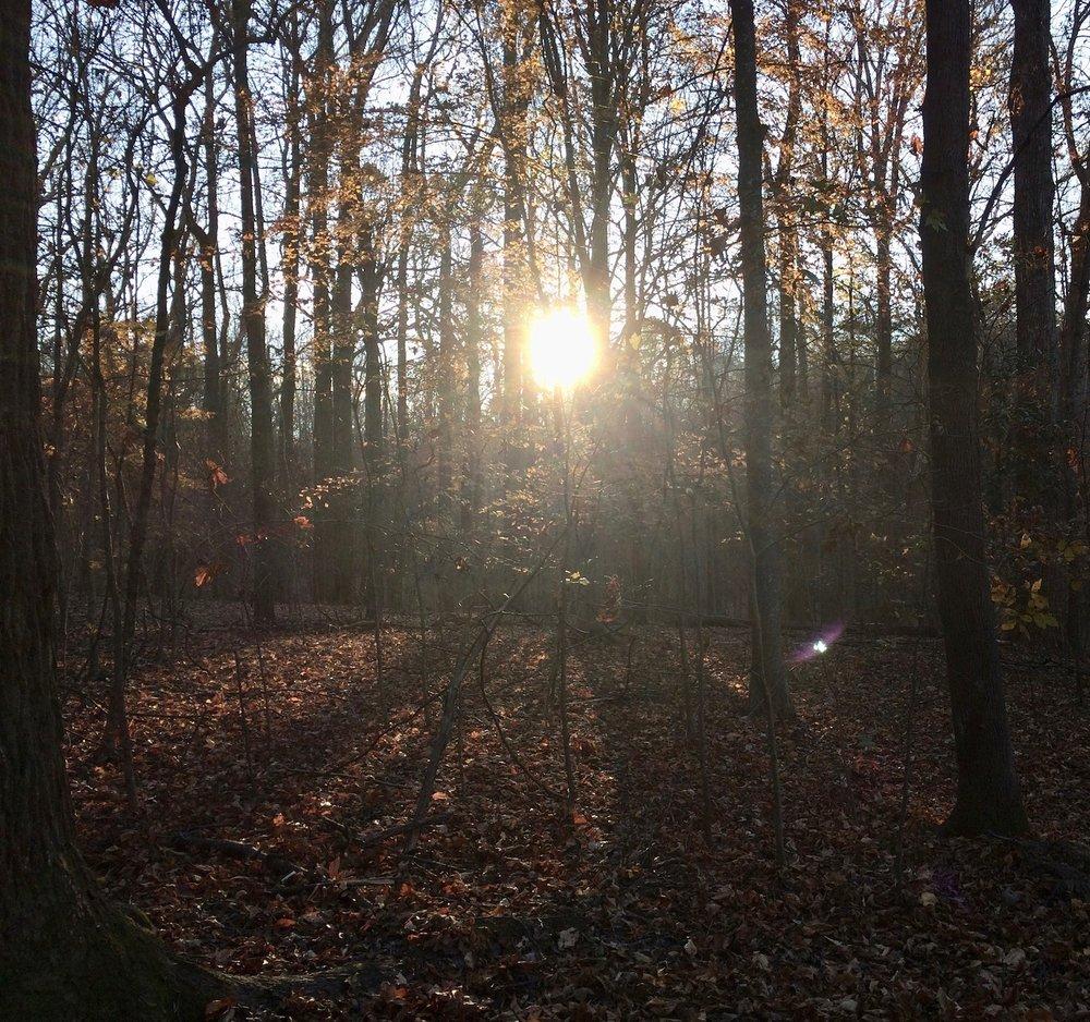 From a November 2018 walk