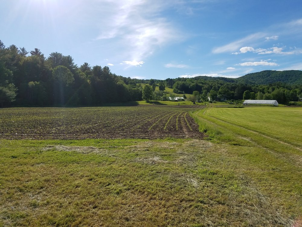 View from Field.jpg