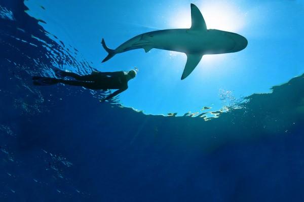 Photo: Ocean Ramsey