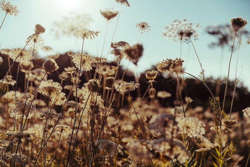 wildflowers_4460x4460.jpg