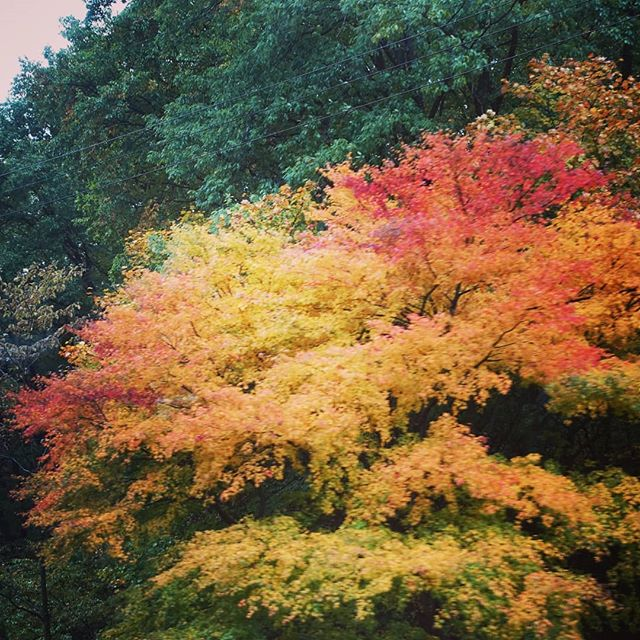 The weather is getting colder and fall is well under way here in Tokyo. Soon the fall leaves will be in full color!  #japanstudy1963 #japanstudy #studyinjapan #studyintokyo #tokyostudyabroad #japanstudyabroad #studyabroad #留学 #留学生 #留学生活 #日本留学 #東京留学
