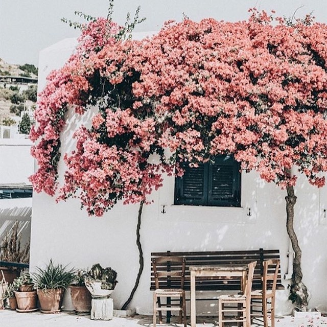 This looks lovely 💕 Too bad I can't even enjoy my patio & flowers right now! Summer is my least favorite time of year in FLorida because it's 85 degrees with 99% humidity at 6 am, constantly raining and my hair is in a perpetual 80's perm 👌I hope you guys are faring better than me 😂 . . 📸 via @hawkinsnewyork