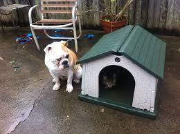 First my dog bed, now my dog house? C'mon!
