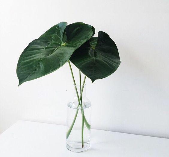 Green Leaf Stems