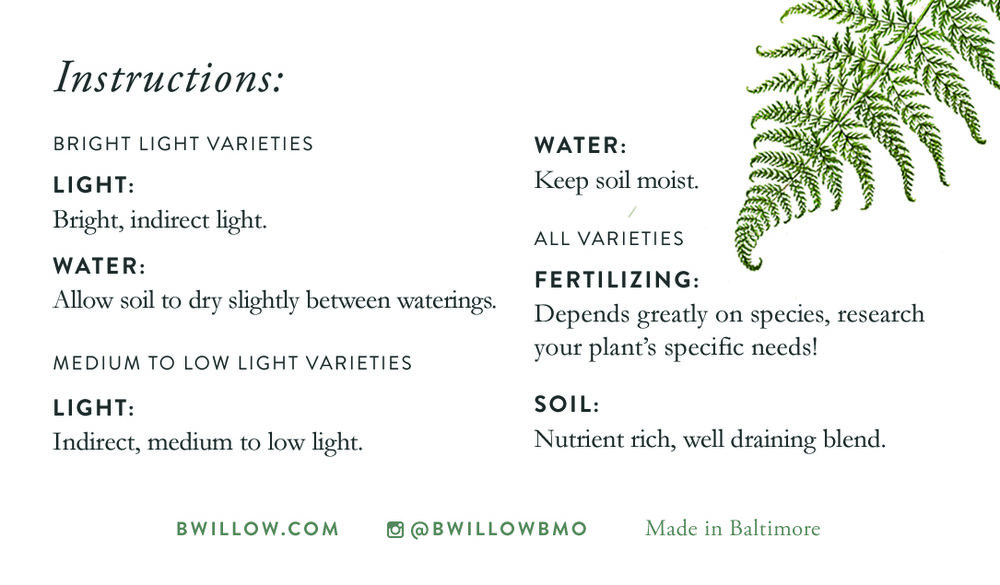 Always look up your specific plant's needs, as tropical plants can vary for care. These are just general guidelines!