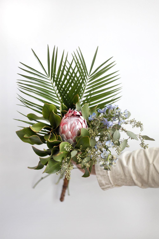 Small Protea