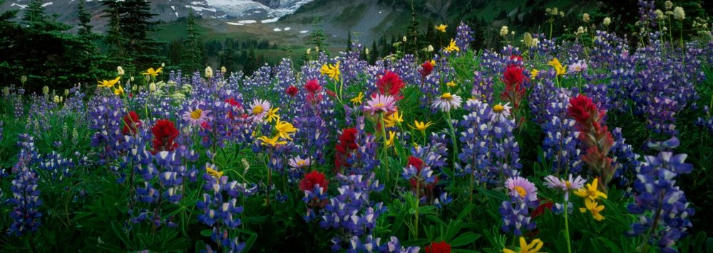 mountains_landscapes_flowers_mount_rainier_wildflowers_desktop_1680x1050_hd-wallpaper-793690.jpg