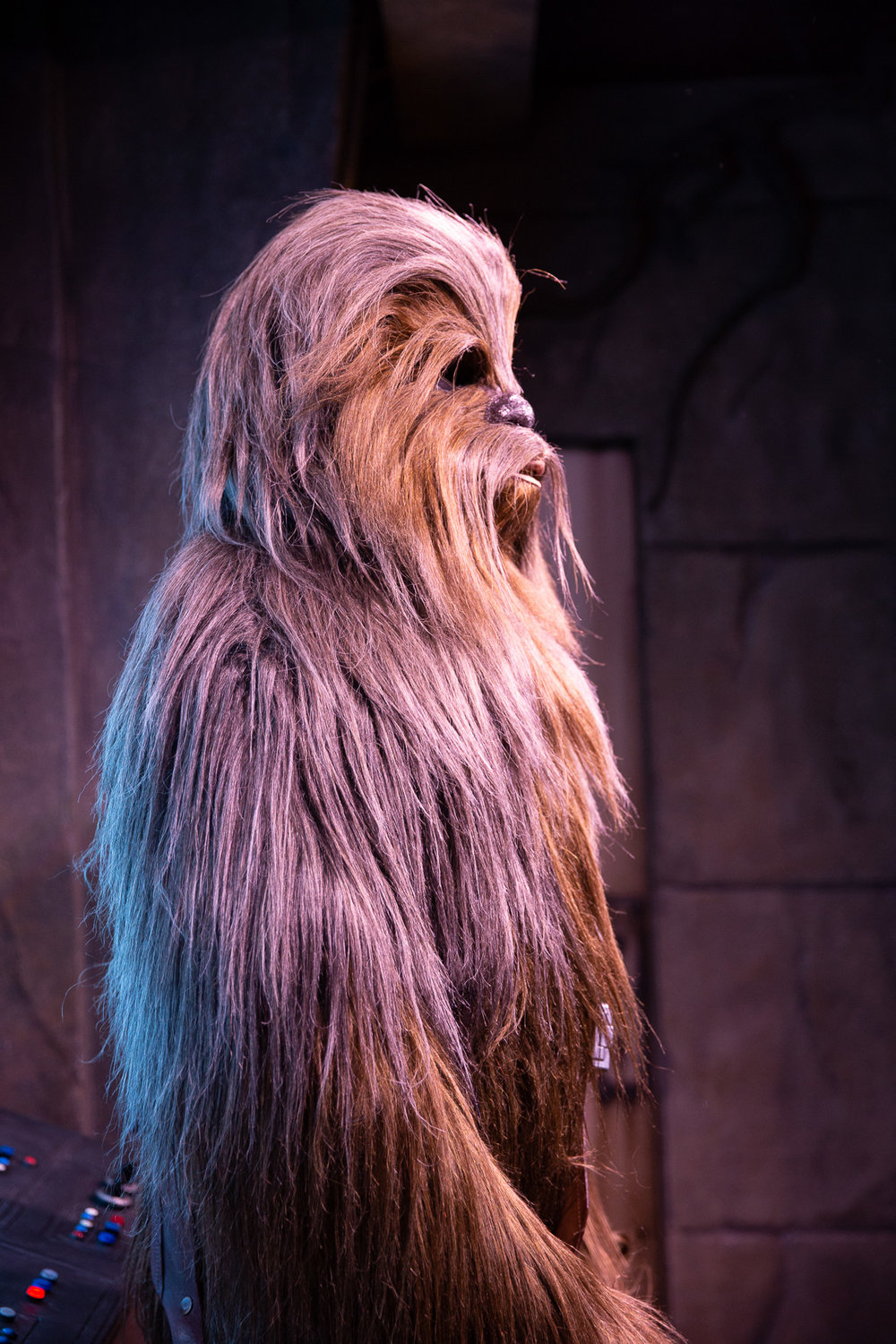 chewy (1 of 1).jpg