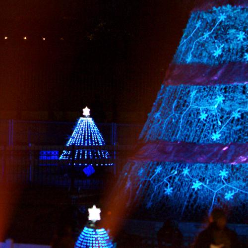 national-christmas-tree-full-motion-video-horticulture-philips-lighting-led-rgb-10twelve.JPG