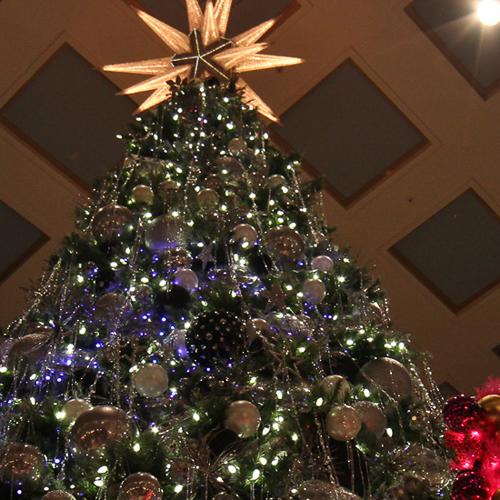 MACY'S CHRISTMAS TREES