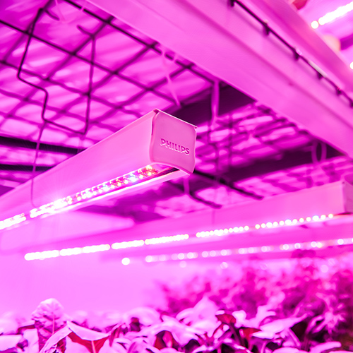 HORTICULTURAL LIGHTING SYSTEMS