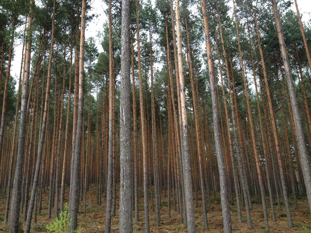 Considering this area had been burned to the ground after World War II, the quiet normalcy of my friend's suburban neighborhood really struck me. In German,pine trees are called  Kiefer . Now every time I see Kiefer Sutherland I think of this forest.