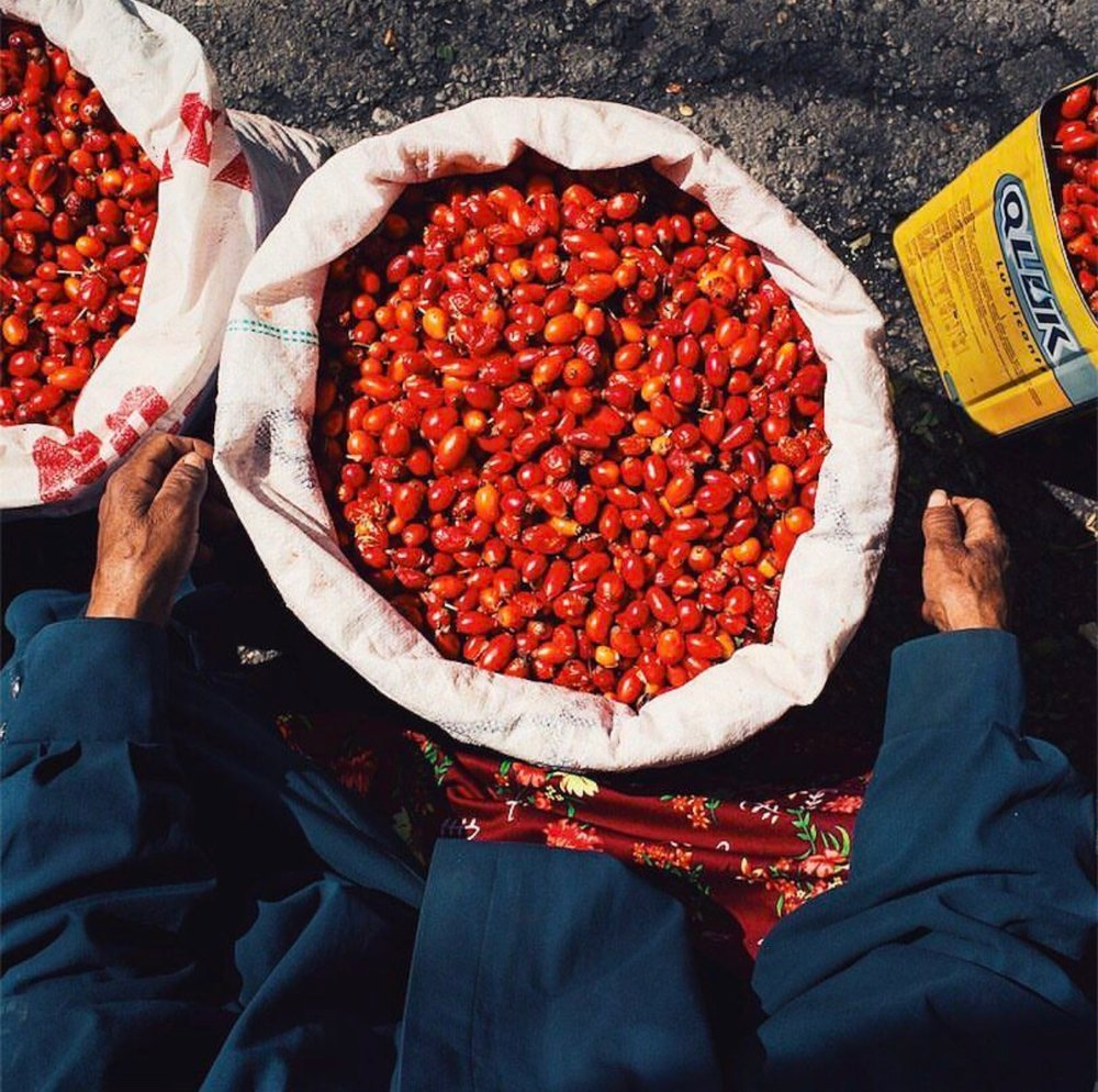 Kuşburnu (rose hips) that Robyn and David came across in Sivas as they were crisscrossing Turkey to write  Istanbul and Beyond .