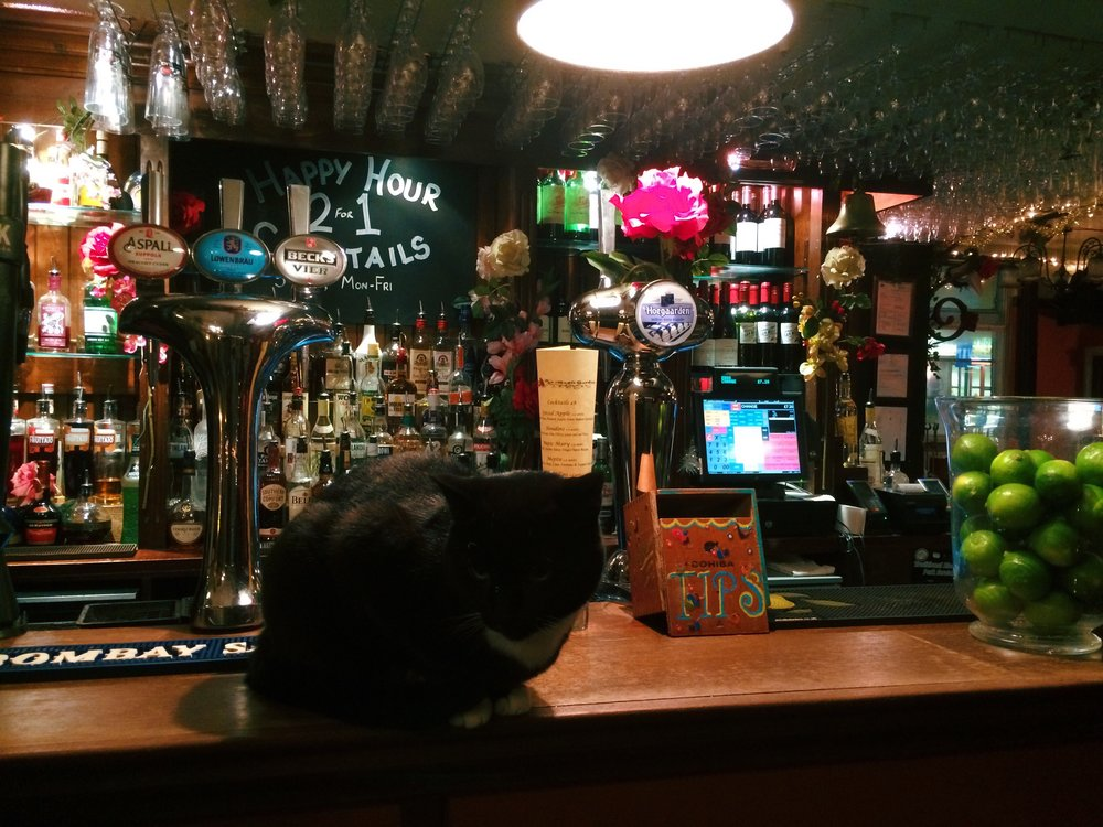The Magic Garden  has cats, two-for-one drinks, and live music. Why wouldn't you go here??