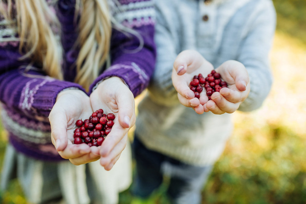 Berry picking is a religion in Estonia. Red berries in Estonia. Photo by Aron Urb.