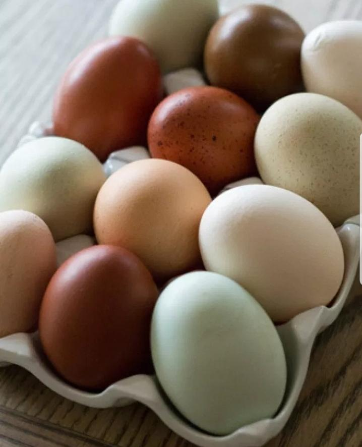Beautiful farm fresh pature grown eggs!!