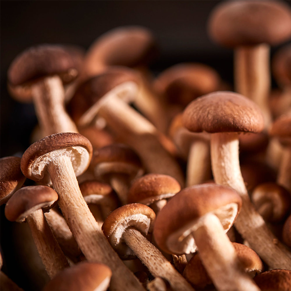 Velvet Pioppini - Magnificent dark brown caps on long cream colored stems, the intense forest flavor makes it a natural for pastas, game, and red meats.
