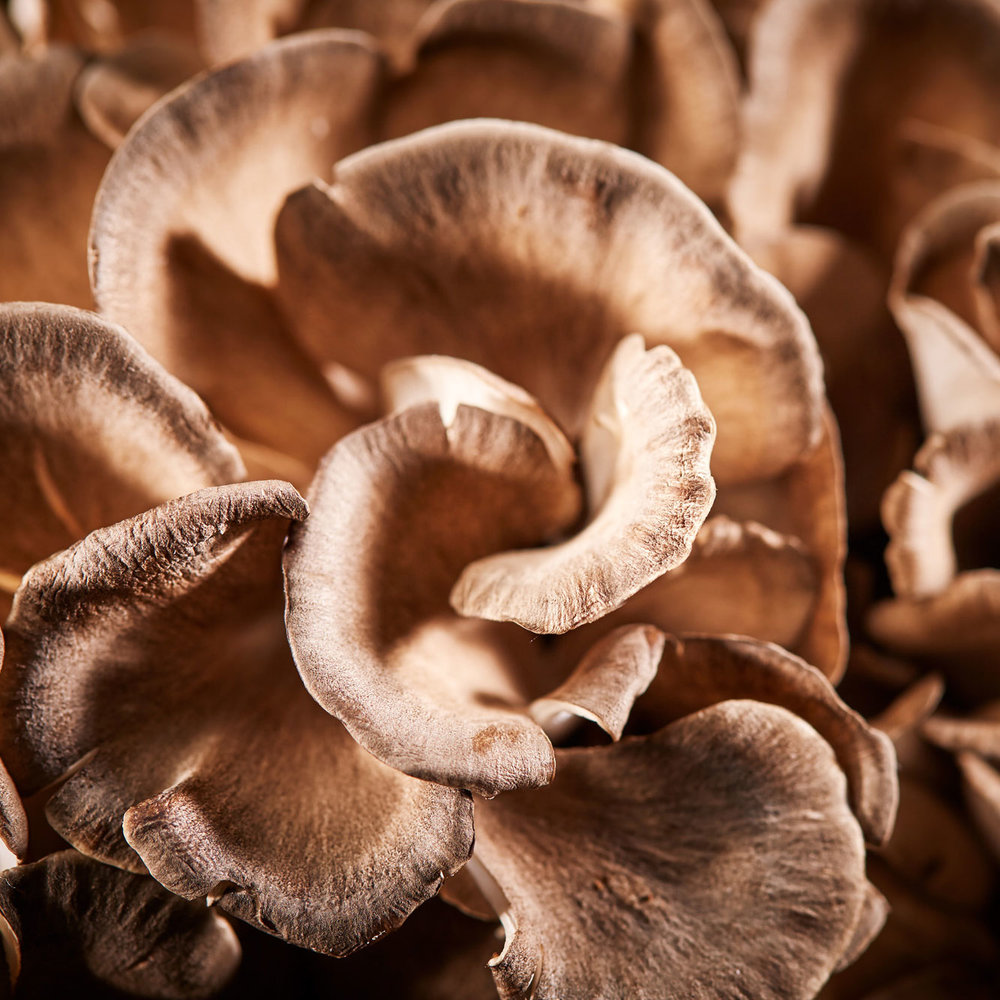 Maitake Frondosa - Composed of leafy fronds that have a fresh aroma and firm texture. Highly valued for properties supporting the immune system. Our best seller!