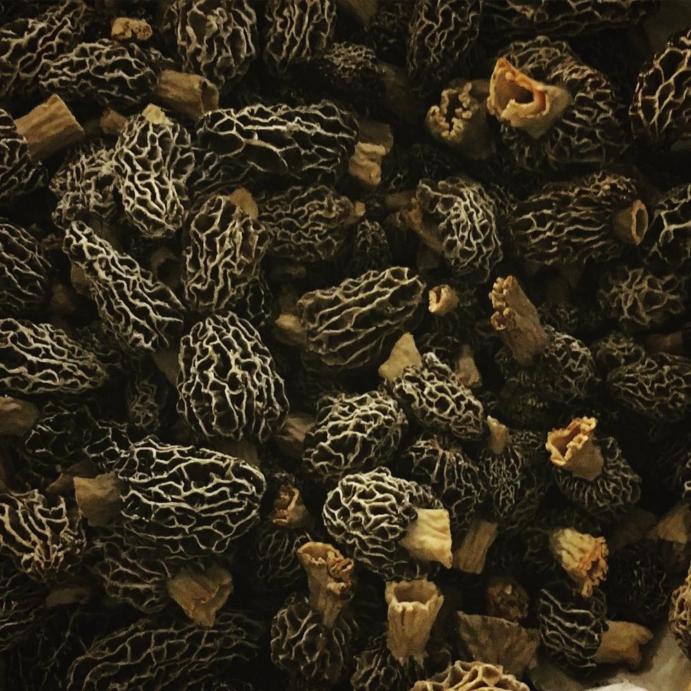 We're developing strains of Sparassis, Lions Main, and cultivated Morels! -