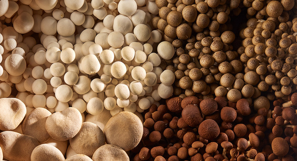 mushroom-varieties.jpg