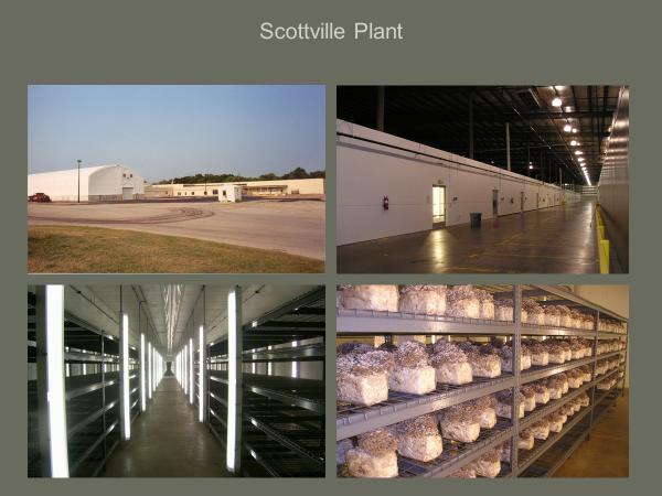 scottville-plant.png