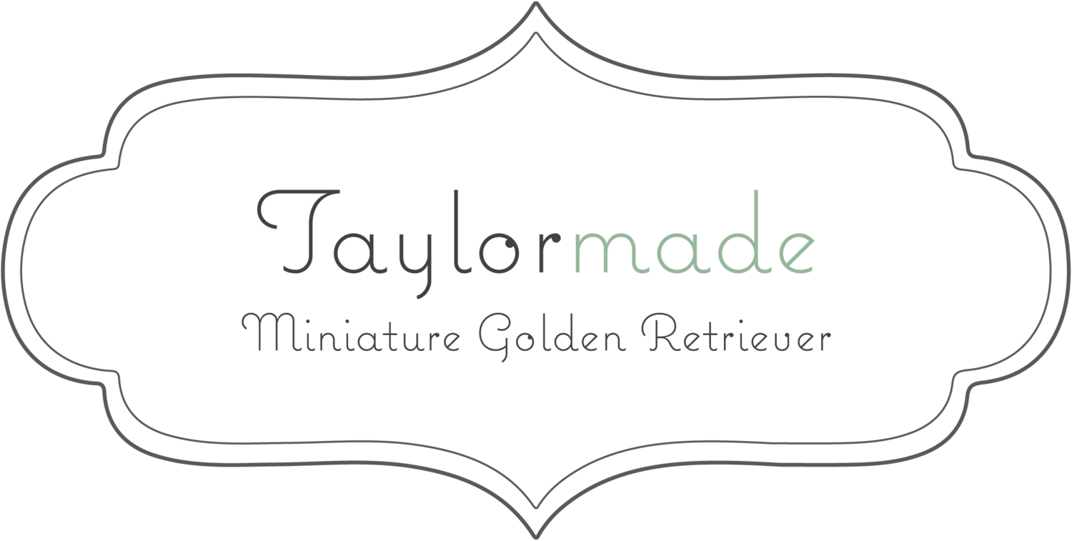 Taylormade Miniature Golden Retriever