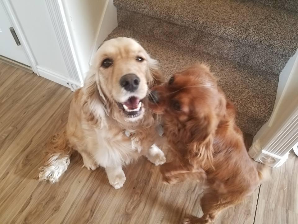 Piper and Reggie
