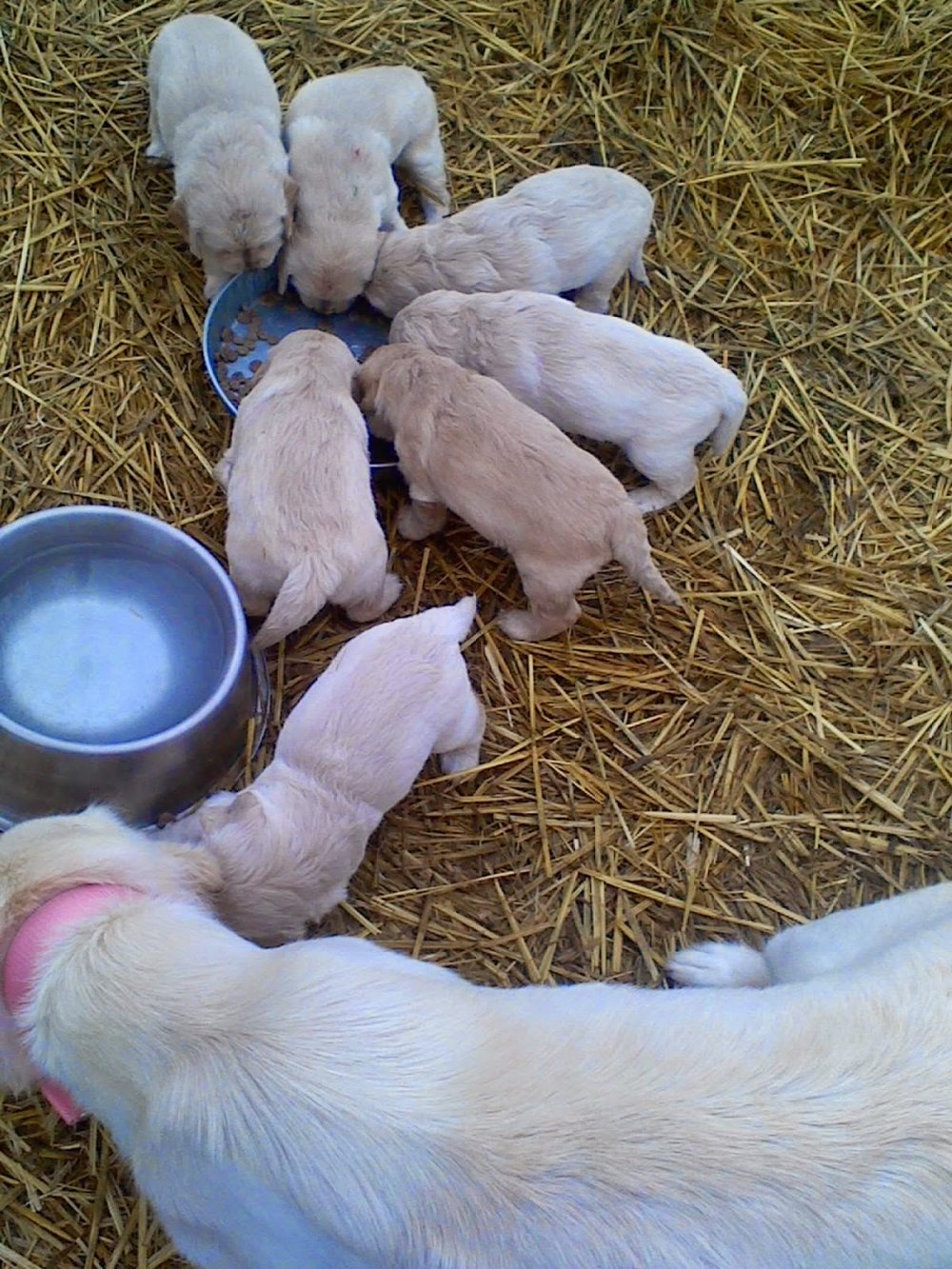 The puppy food was a hit! -