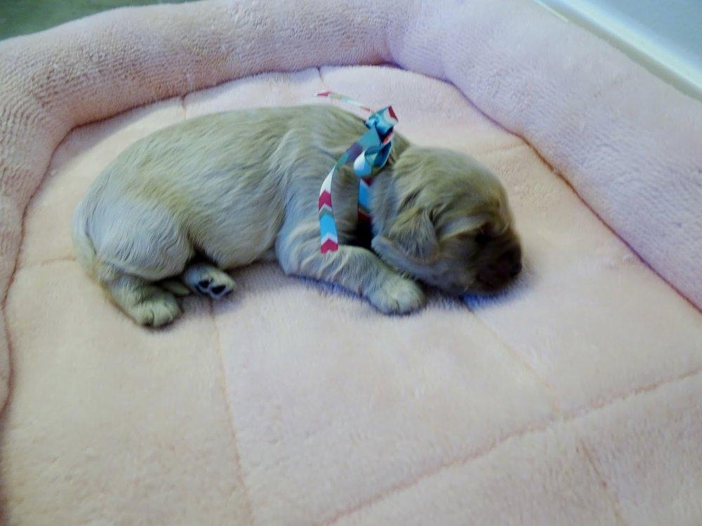 Sweetie Bell, 1 Week