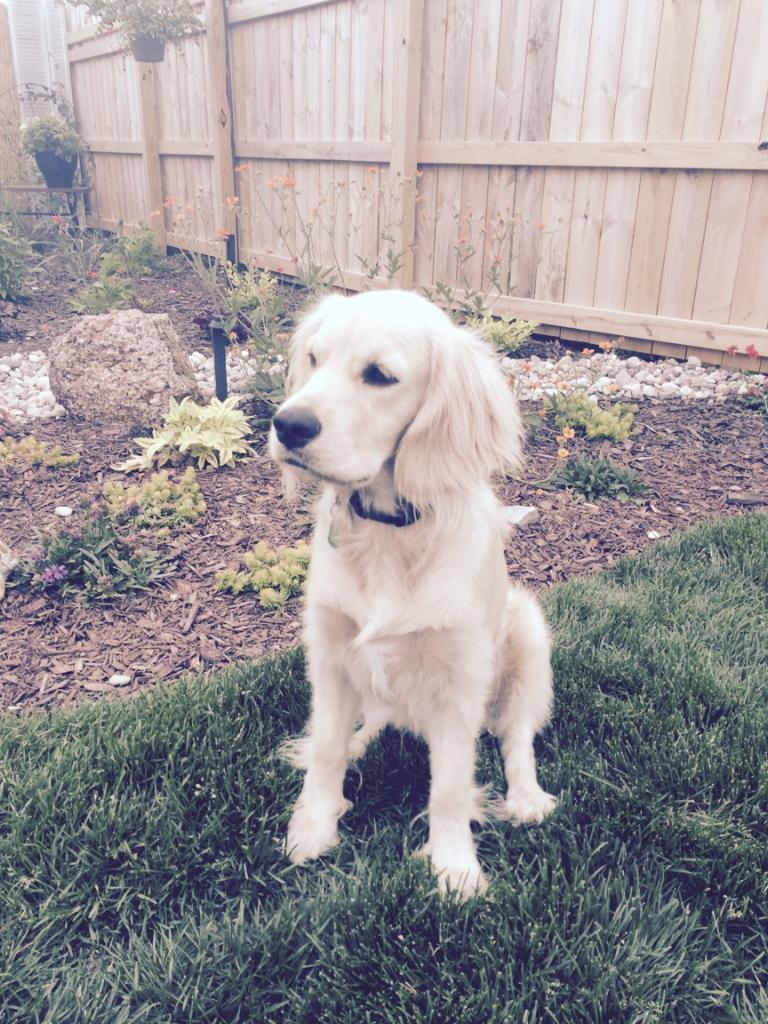 Finn (Olaf)