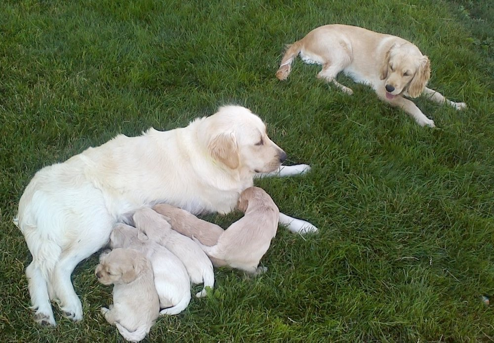 Piper and her new little siblings + Mommy Pinkerton