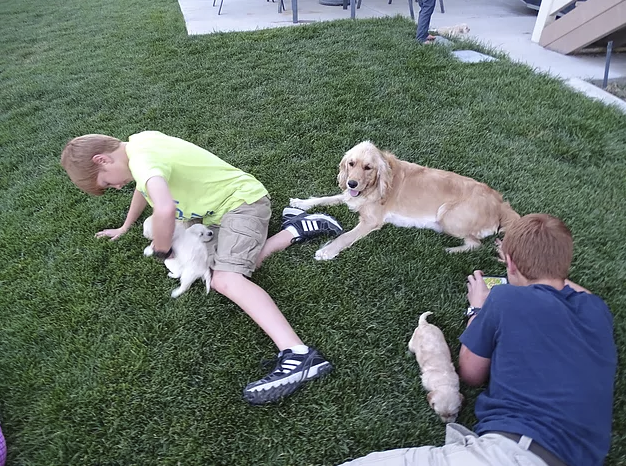 Piper sure enjoyed the summer afternoon with our boys and the puppies playing outside.