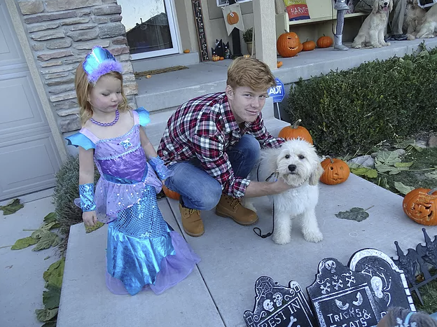Here is our mini Golden, Nala, with the Lumberjack and Mermaid