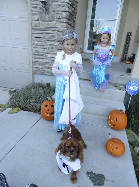 Here is our Cavalier, Reggie the Karate Kid, with Elsa!