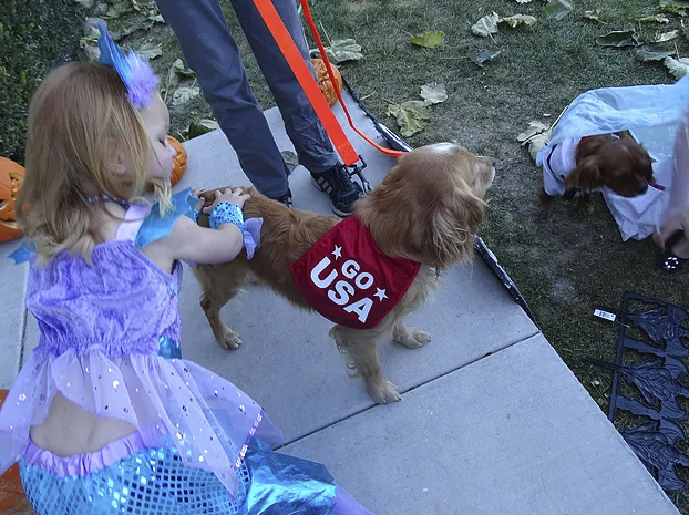 Our Miniature Golden Retriever, Sullivan the Olympic Athlete, with his Nerd and Mermaid
