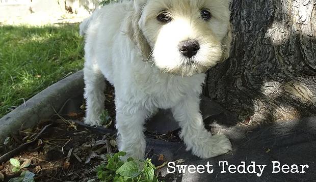 3_Nala sweet teddy bear.png