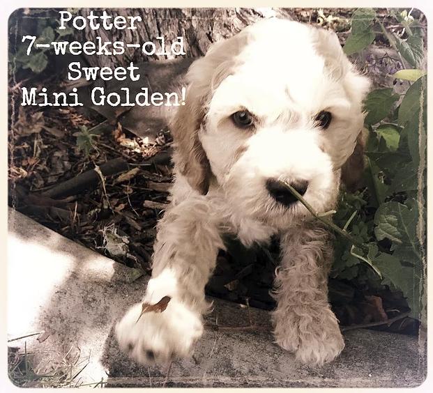 27_Potter.png
