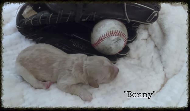 4_Benny.png