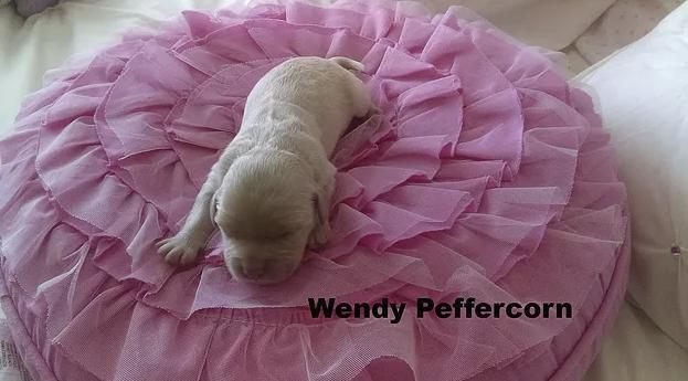 16_Wendy P.png