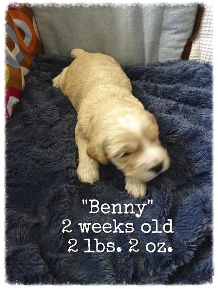4_Benny 2 weeks old.png