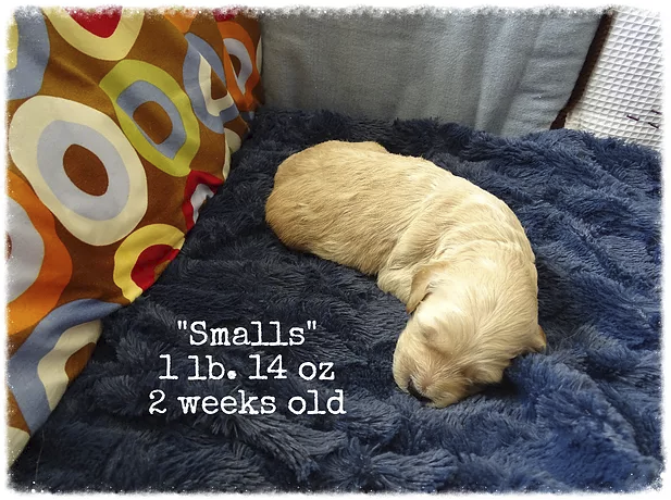 8_smalls 2 weeks old.png