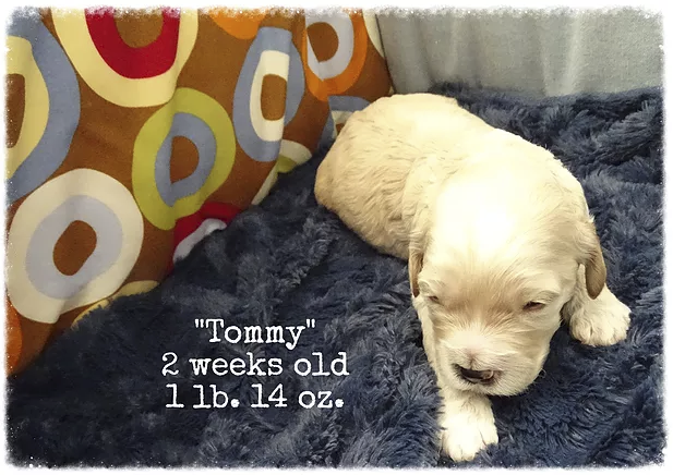 14_tommy 2 weeks old.png