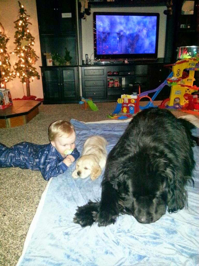The Day after Christmas 2014- Shannah's darling baby with Ozzy and Bear