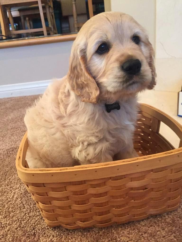 Cooper in a basket, darling