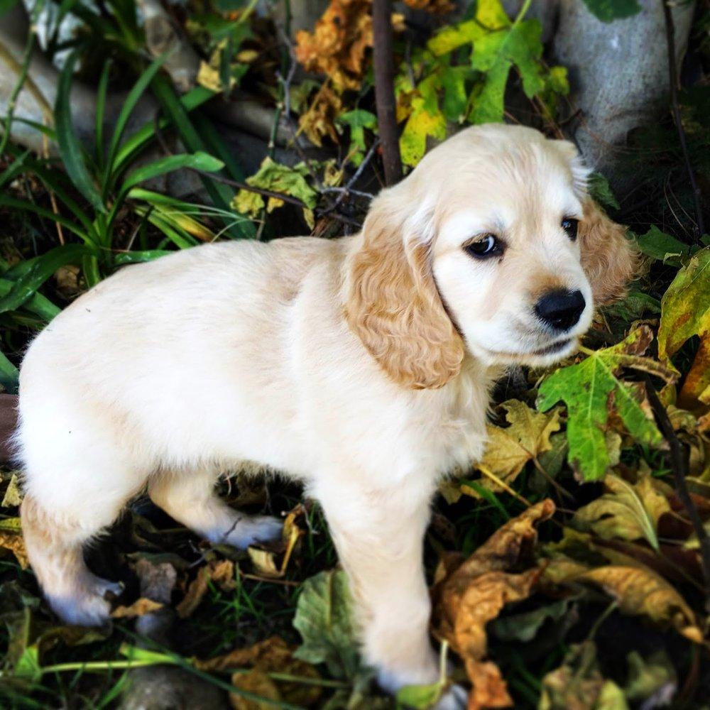 More cute pics of Kona that Mallory sent me!