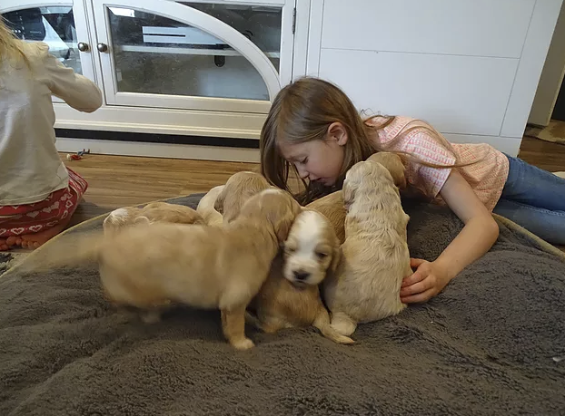 5_Pipers Puppies.png