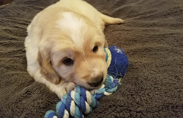 Kona and his chew toy!