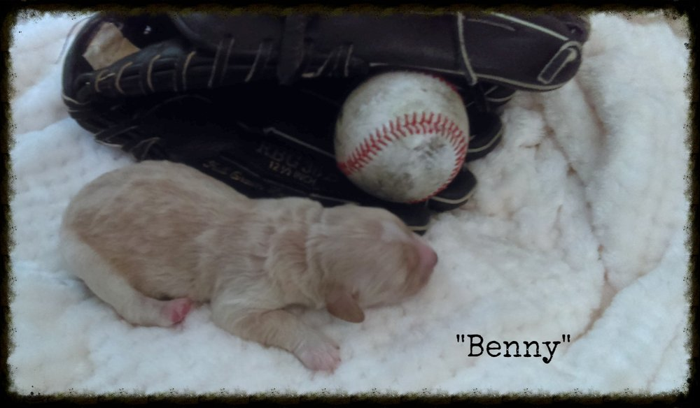 Benny_Birth Weight_2.jpg